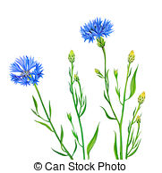 Knapweed Clipart and Stock Illustrations. 207 Knapweed vector EPS.