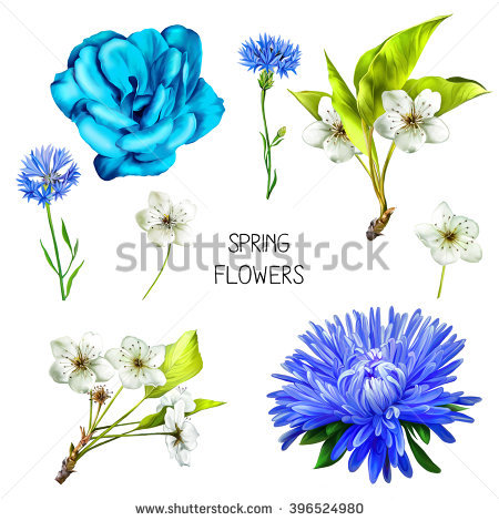 Knapweed Stock Images, Royalty.