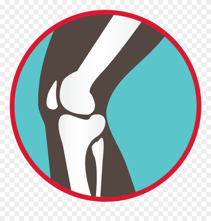 Bones Of The Knee Joint Graphic.