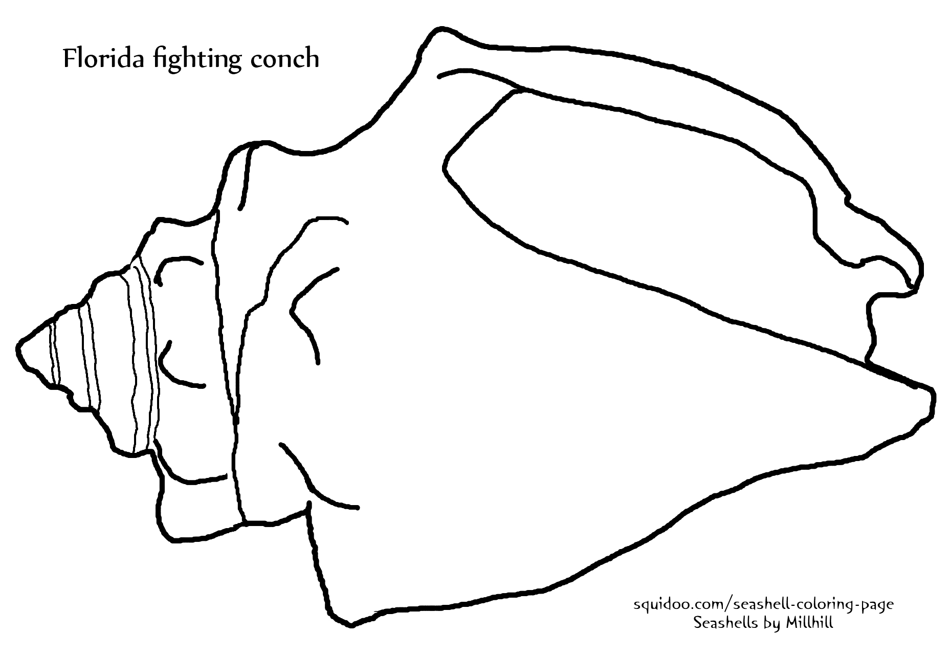 1000+ ideas about Fighting Conch on Pinterest.
