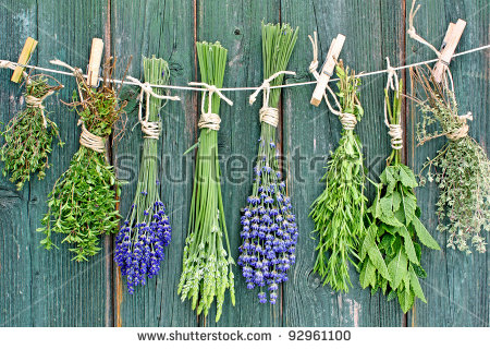 Italian herbs free stock photos download (306 files) for.