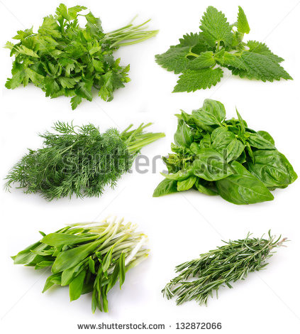 Herbs herbal free stock photos download (313 Free stock photos.