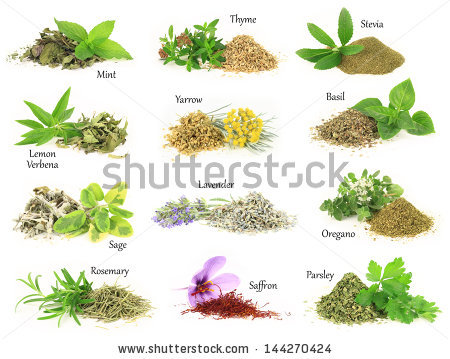 Mint herb free stock photos download (323 Free stock photos) for.