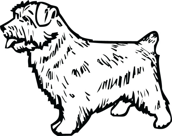 Norfolk terrier clipart.