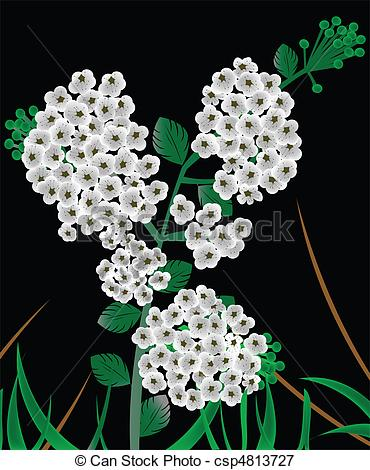 Stock Illustrations of meadowsweet background csp4813727.