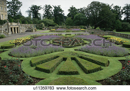 Stock Photo of Lavender borders and clipped box patterns in formal.