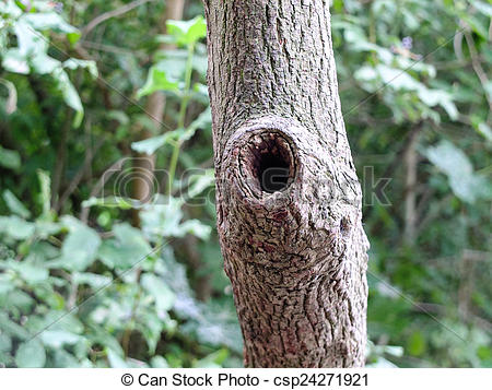 Knothole Stock Photo Images. 344 Knothole royalty free images and.