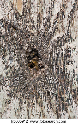 Stock Photo of Knothole In A Tree k5665912.