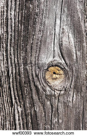 Stock Photo of Old timber, knothole, close up wwf00393.