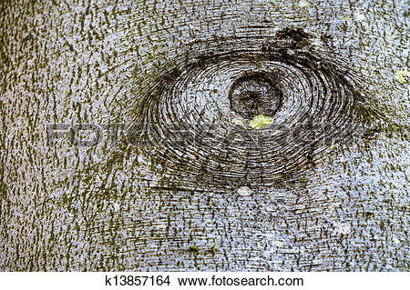 Stock Photo of Knothole of a tree. k13857164.