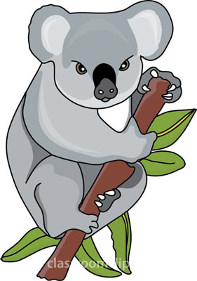 Koala bear clipart #12