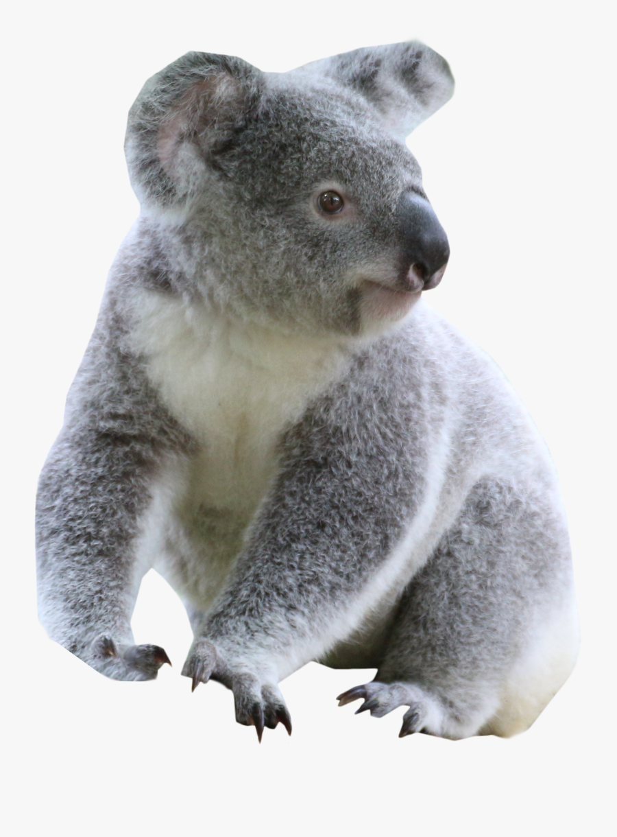 Transparent Background Koala Clip Art , Free Transparent.