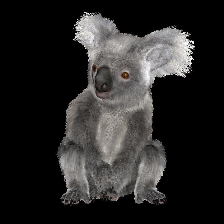 Sitting Koala Bear PNG Transparent Image.