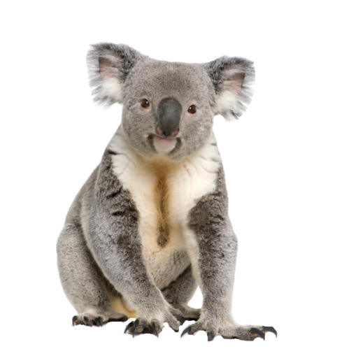 Download Free png Koala PNG, Download PNG image with transparent.