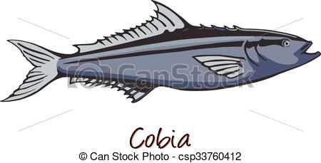 Vector Clip Art of Cobia, Color Illustration csp33760412.
