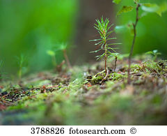 Forest soil Images and Stock Photos. 9,081 forest soil photography.