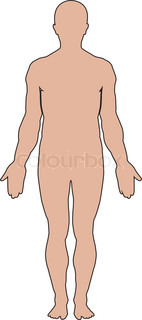 Male human anatomy.