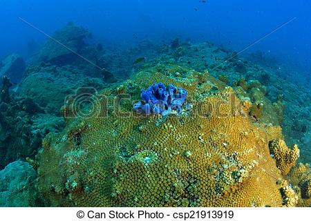 Stock Photography of Beautiful Coral reef in Koh Tao, Thailand.