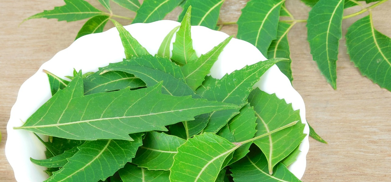 18 Amazing Benefits and Uses Of Neem Leaves For Skin, Hair And Health.