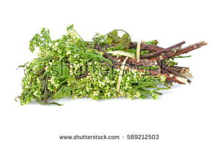 Quinine Stock Images, Royalty.