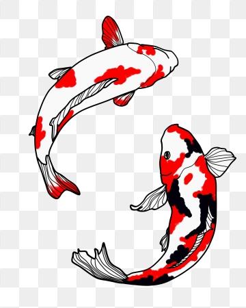 Koi Fish PNG Images.