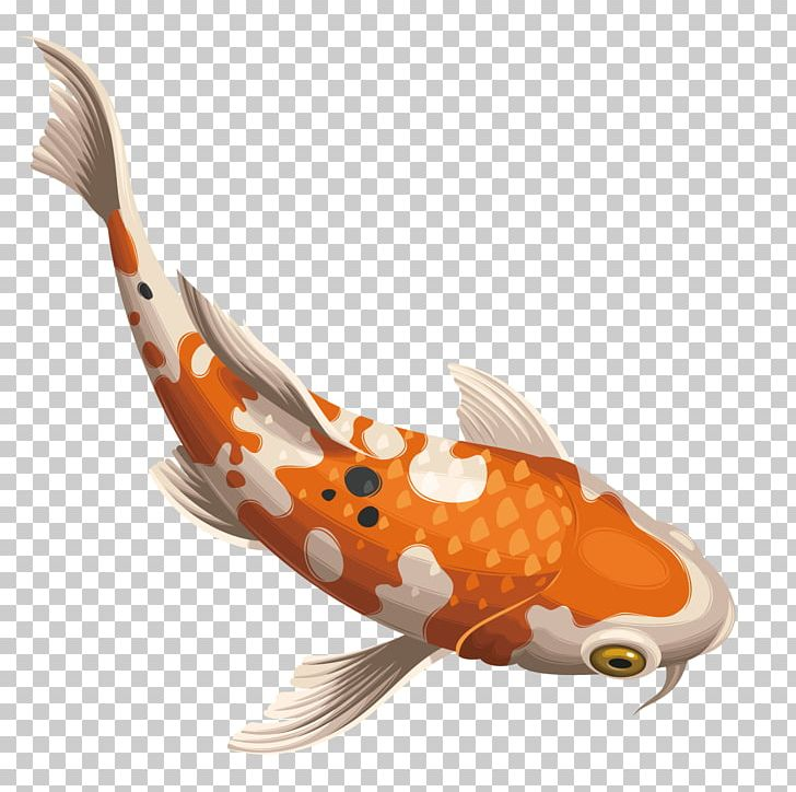 Koi Carassius Auratus Fish PNG, Clipart, Animals, Aquarium Fish.