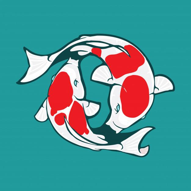 Koi logo design, koi illustration Vector.