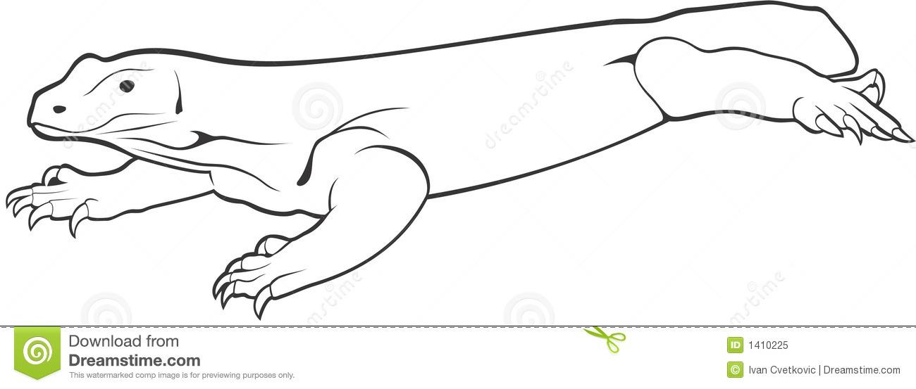 Komodo Dragon Stock Illustrations.