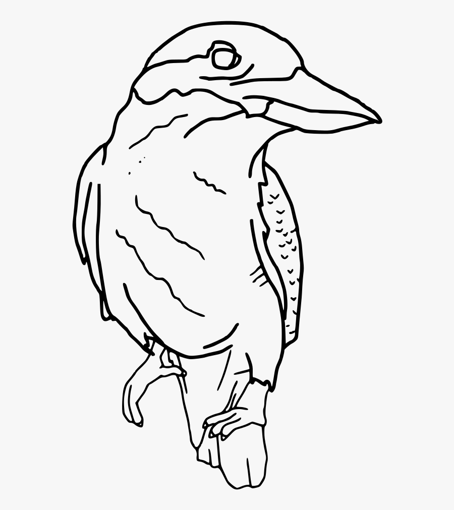 Kookaburra Perched Outline.