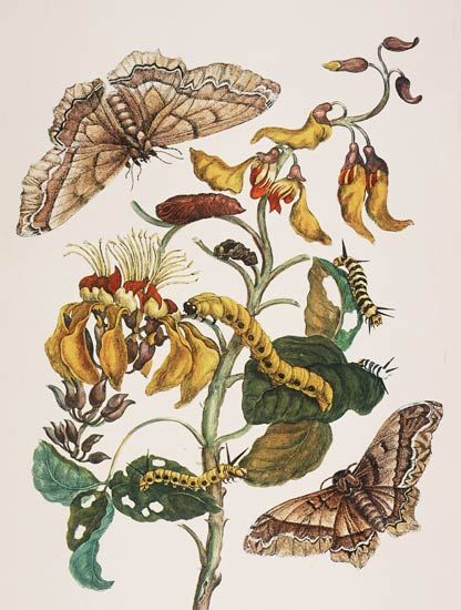 1000+ images about botanical art.