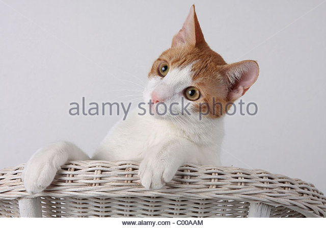 Interestedly Stock Photos & Interestedly Stock Images.