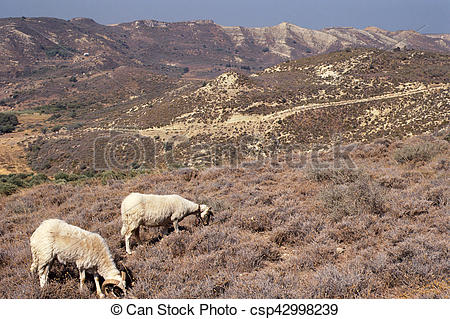 Stock Photos of Black and white goats and landscape in Kos island.