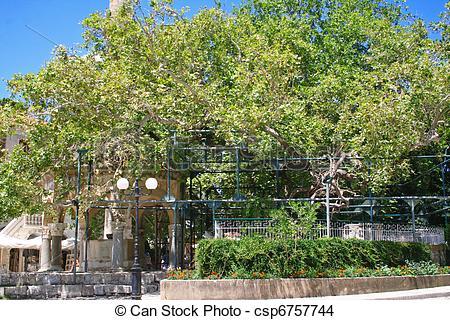 Stock Photo of Greece. Kos island. The Plane tree of Gippokrat.