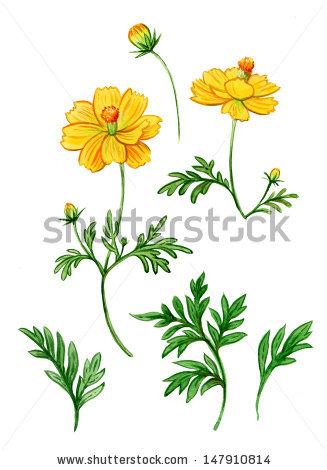 """Chekmareva Irina's """"flowers"""" set on Shutterstock."""