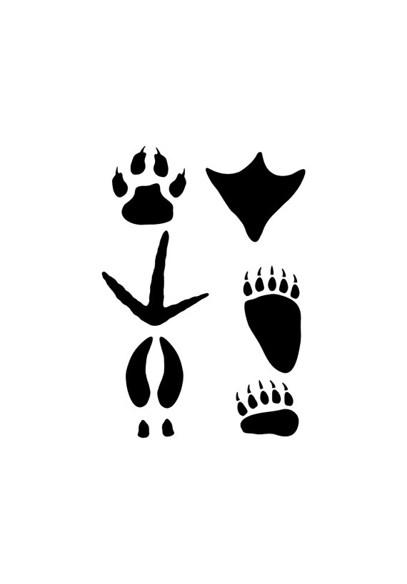 Similiar Wild Turkey Tracks Clip Art Keywords.