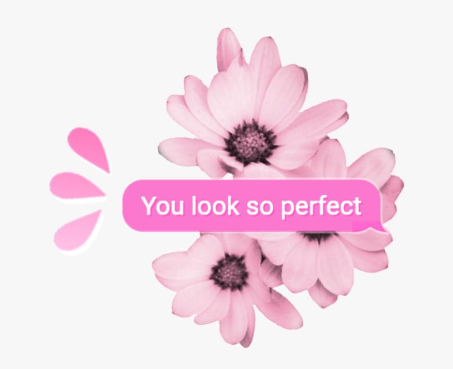 random #pink #tumblr #overlay #aesthetic #kpop #cute.