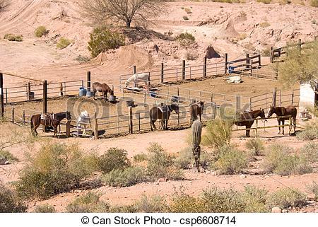 Stock Foto van paarde, kraal.