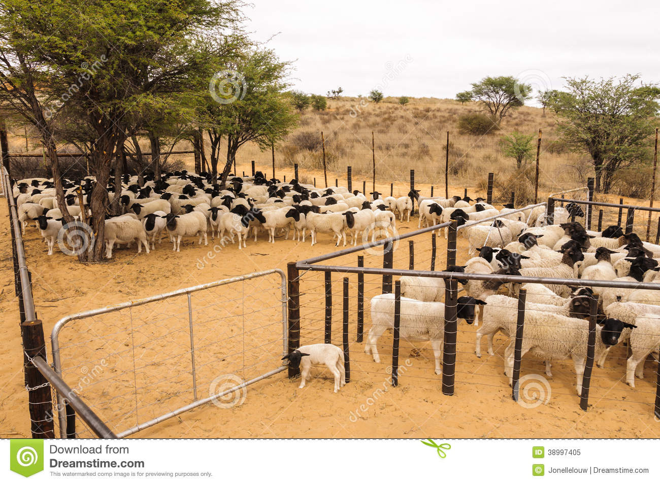 Kraal Stock Photos, Images, & Pictures.