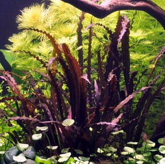 1000+ images about aquarium on Pinterest.