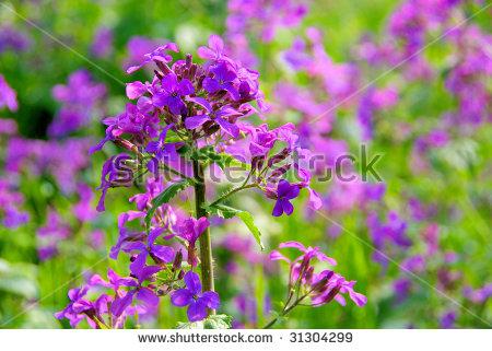 Lunaria free stock photos download (3 Free stock photos) for.