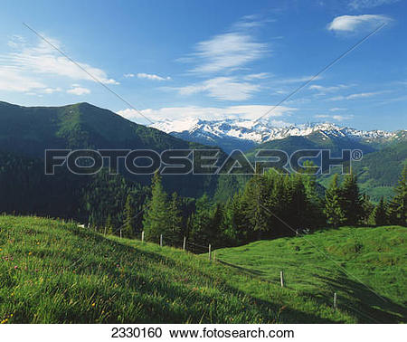 Stock Photography of Trees on mountains, Grossarltal, Keeskogel.