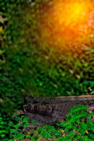Image result for cb edit background.