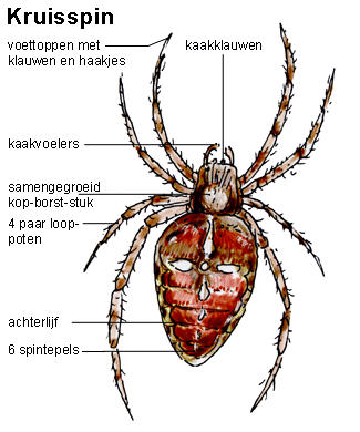Holland, Spider and Tes on Pinterest.