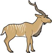 Free Kudu Pictures.