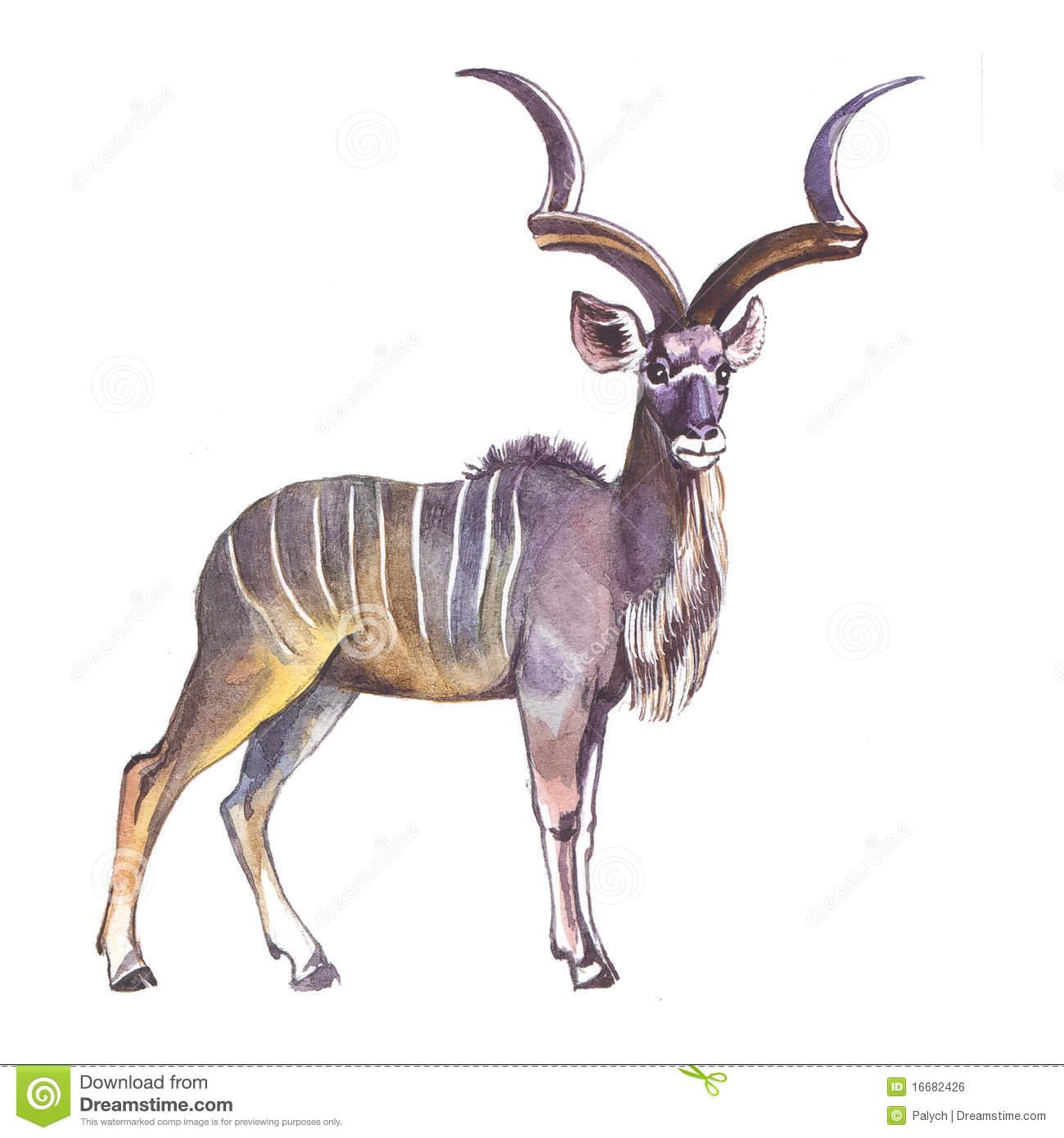 Kudu Stock Illustrations.