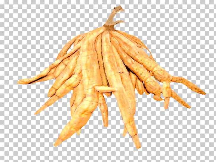 Kudzu Tuber Root Sâm Leaf, Leaf PNG clipart.