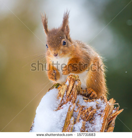 Species rodent free stock photos download (227 Free stock photos.