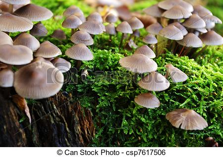 Stock Image of Mushrooms on a mossy log.