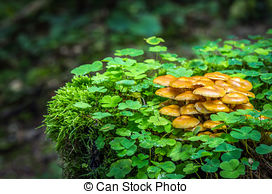 Stock Photography of Kuehneromyces mutabilis.