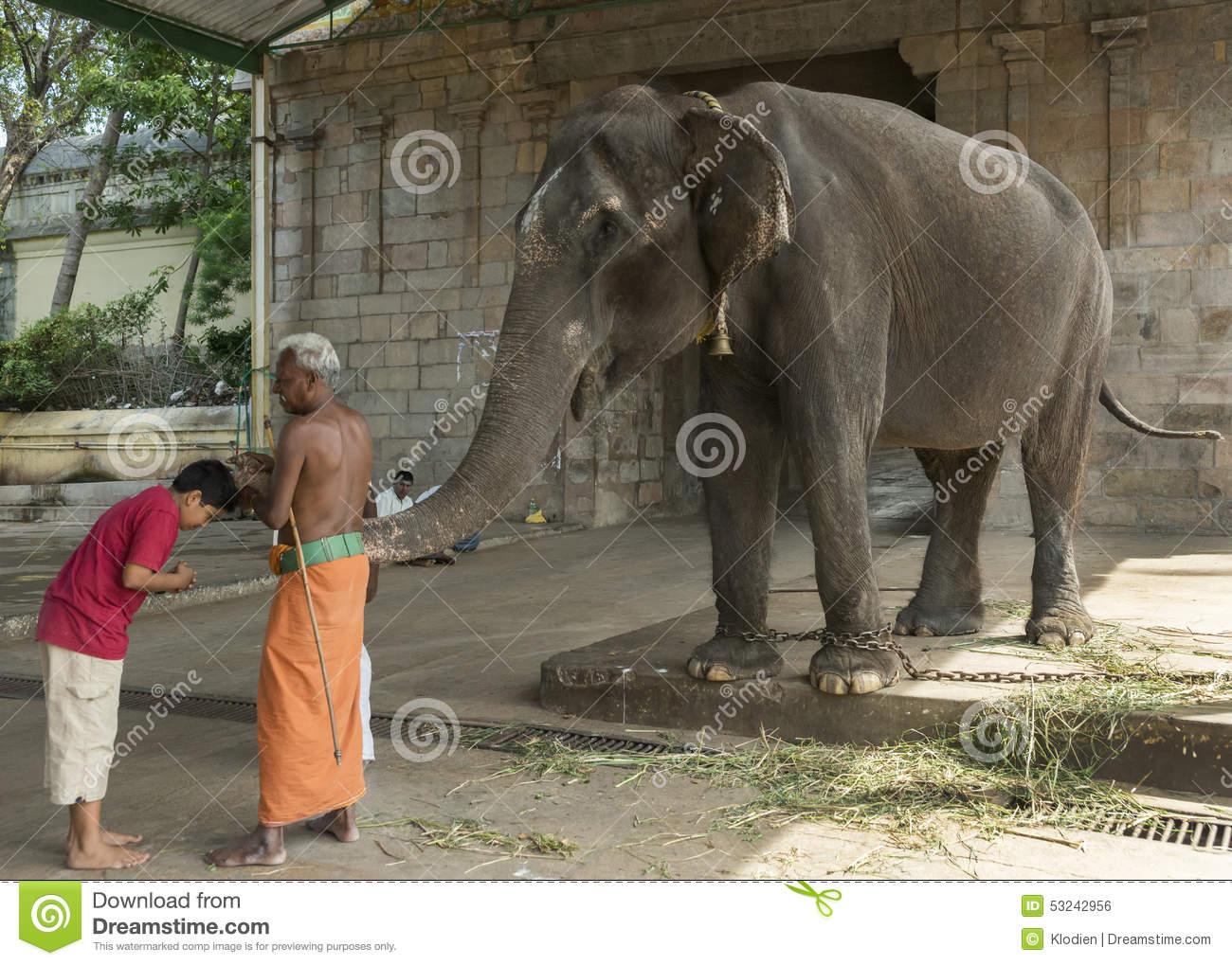 Elephant Blessing At The Mahalingeswarar Temple. Editorial Photo.